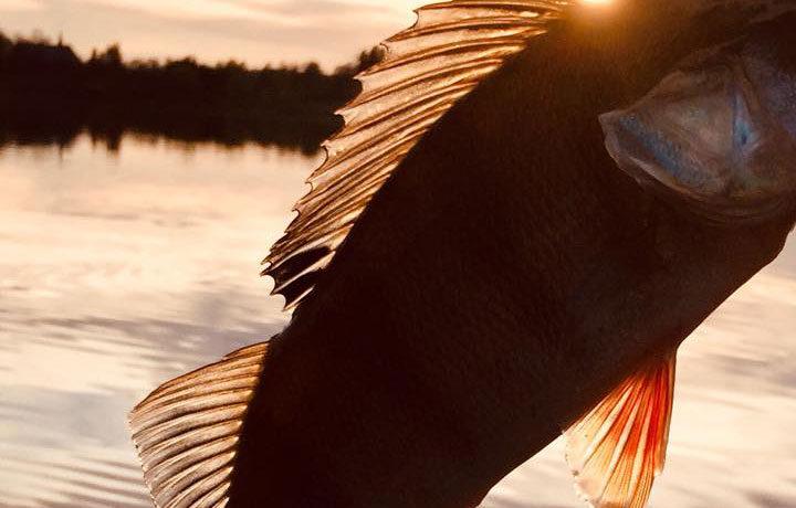 Fiskar i Molkomsjön